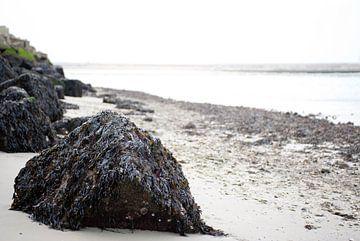 Sea Rock van Joyce Digital Art