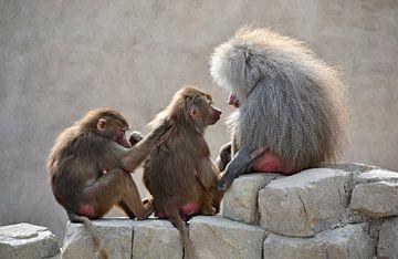 Affenliebe von Imke Beijer