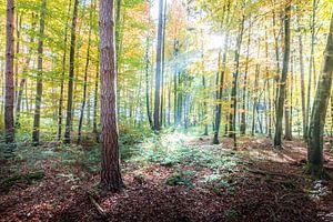 Der Wald im Herbstgewand