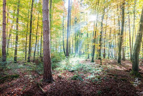 Der Wald im Herbstgewand van Hannes Cmarits