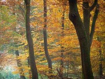 Colours of Autumn von