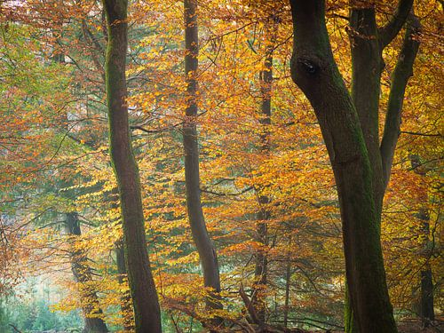Herfstkleuren van Niels Eric Fotografie