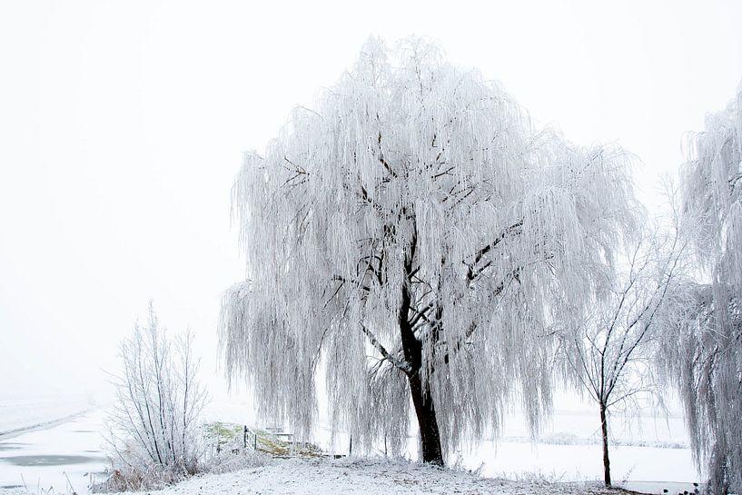 Winter in de polder van Rick Keus