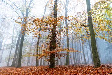 Vue dans un paysage brumeux de hêtres à hêtres sur Sjoerd van der Wal