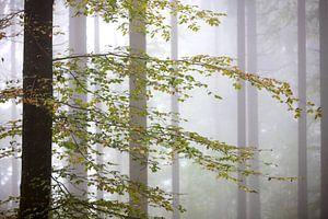 Herbst im Wald van