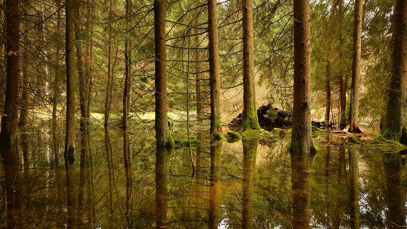 Reflection van Sran Vld Fotografie