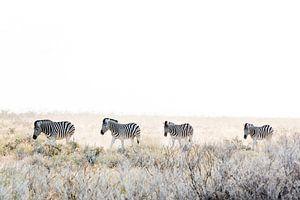 Zebra's op pad van Gerard van Roekel