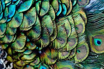 Pfauen-Muster von Jo Beerens