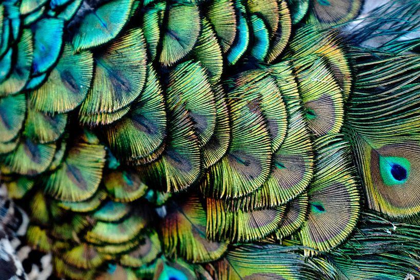 Pauw patroon van Jo Beerens