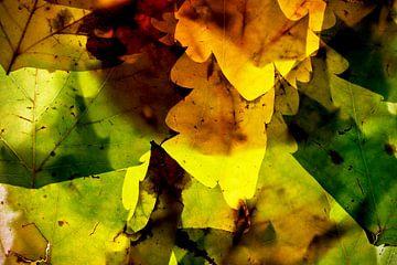 Herfstbladeren 10 van Henk Leijen