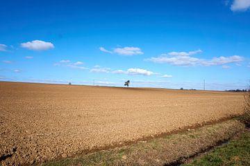 Panoramablick auf Weizenfelder unter blauem Himmel von creativcontent