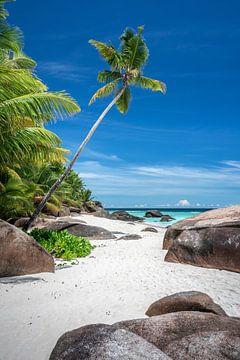 Tropischer Strand mit Palmen auf den Seychellen von Krijn van der Giessen