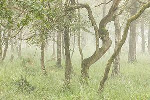 Mistig bomen landschap van Art Wittingen