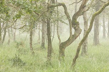 Mistig bomen landschap