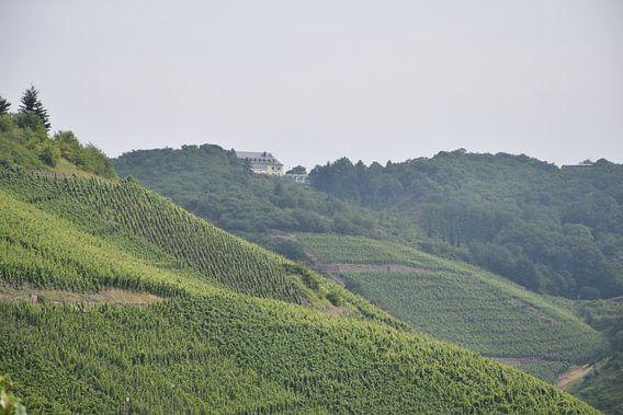 wijnveld in het rheindal