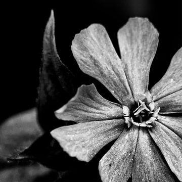 Blume mit herzförmigen Blättern in Schwarz und Weiß von Arendina Methorst