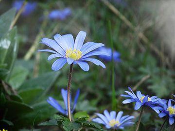 Blumen van Tomas S.