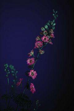 Flowers van Carla Van Iersel