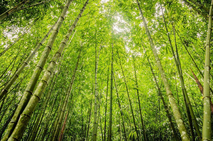 Vierkante bamboe in Taiwan