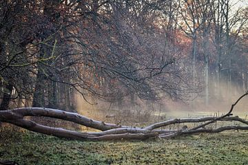 Zonnestralen op open plek in het bos van Shirley Douwstra