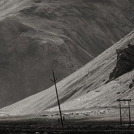 Breng de schapen terug naar huis! van Affect Fotografie