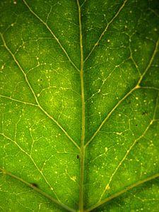 Surrealistisch groen boomblad van Vectorific Design