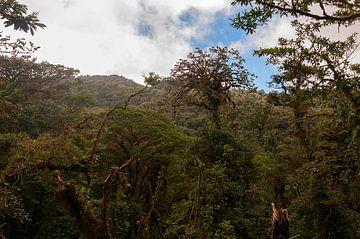 Costa Rica: Selvatura Park van Maarten Verhees