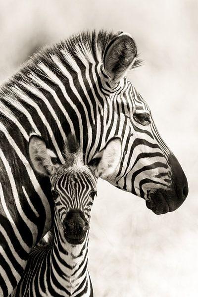 Zebramutter mit Fohlen von Ed Dorrestein