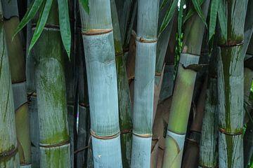 Bambus von Marieke Funke