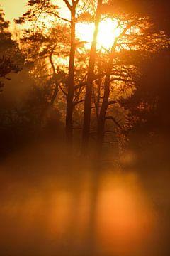 zonsopgang in de mist van Petra De Jonge