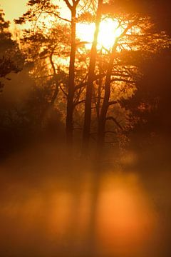 Sonnenaufgang im Nebel von Petra De Jonge