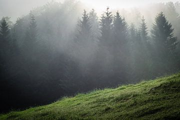 Mist in het bos van Martin Wasilewski