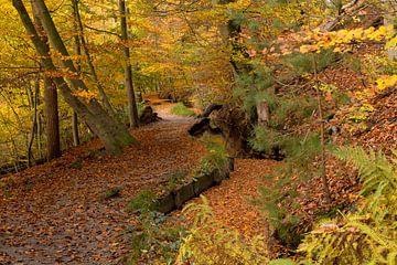 Herbst auf der Sint Jansberg