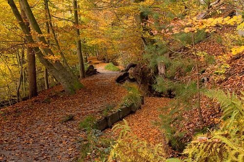 Herfst op de Sint Jansberg van Paul Wendels