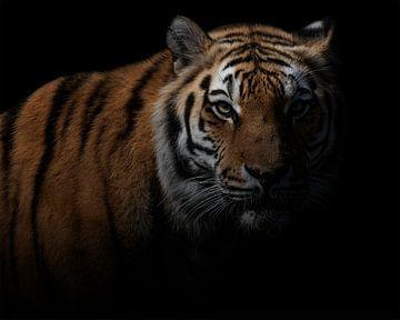 Gefährlicher Tiger in der Dunkelheit von Patrick van Bakkum