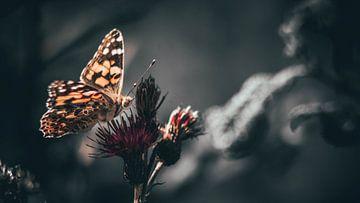Schmetterling von Bjorn Brekelmans