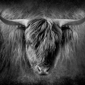 Schotse Hooglander portret in zwart wit van Danny den Breejen
