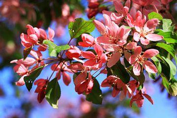 Bloemen van bloeiende bomen van Jolanta Mayerberg