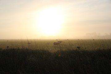 Texel Landschap 031 van Starworks Lien van der Star