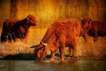 Schotse Hooglanders van Anita Loos