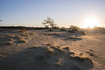 De Nederlandse Sahara van Daniel Van der Brug