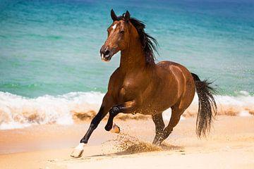 Cheval au galop sur la plage au Portugal sur Yvette Baur