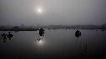 Mistige ochtend Vlieland.