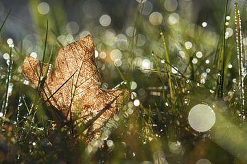Goldener Herbst von zwergl 0611