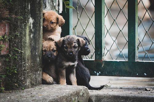 Colombiaanse puppy's van Ronne Vinkx