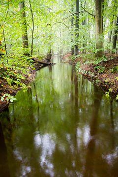 A forest creek flows through the greens sur Niels Eric Fotografie