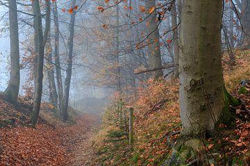 Mistig herfstbos met bospad