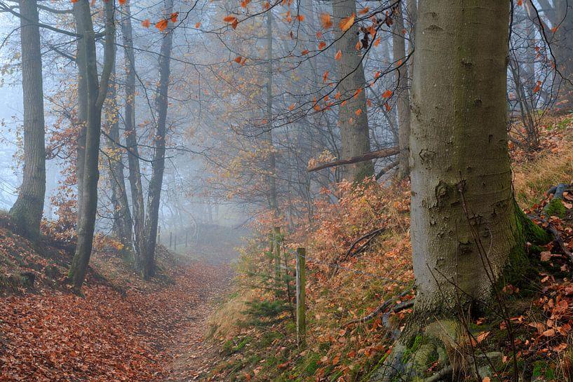 Mistig herfstbos met bospad van Peter Bolman