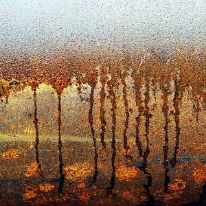 Monet like van