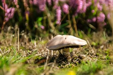 paddenstoel met heide van Bas Maas